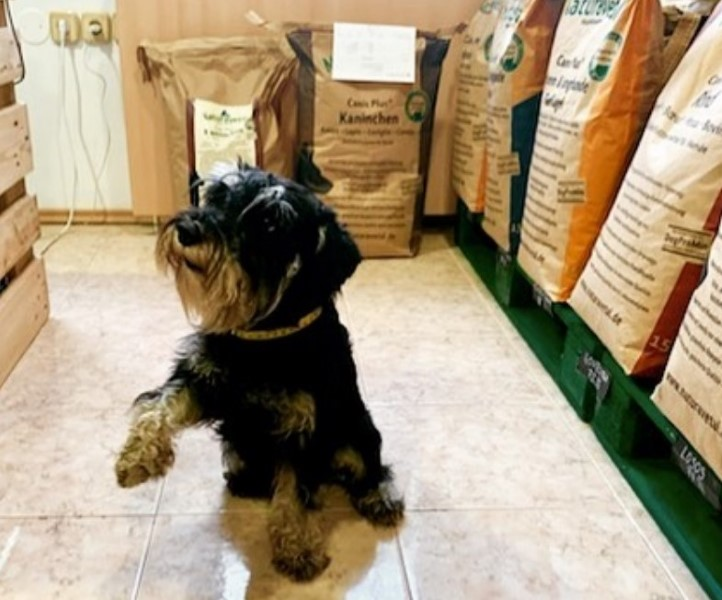 Pes v pasji trgovini